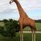 Girafe - 340 cm 3499.00 € ttc