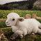 Mouton - 30 cm 103.20 € ttc