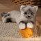 Petit chat de Birmanie - 41 cm 96.00 € ttc
