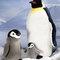 Pingouin - 43 cm 92.40 € ttc