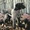 peluche Animaux Domestique chien Braque Allemand noir - 47 cm Kosen 138.00 € ttc