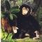 Chimpanzé - 40 cm 118.80 € ttc