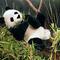 Panda assis - 28 cm 100.80 € ttc