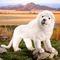 Lion blanc 48 cm 193.20 € ttc