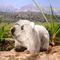Petit wombat marsupial d'Australie 94.80 € ttc