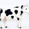 Vache Noire et Blanche 92cmH/122cmL 390.00 € ttc