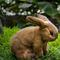 Bunny beige  Sahara  - 24 cm 112.00 € ttc