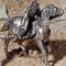 Estafette à cheval 188.63 € ttc