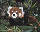 Kosen Panda doré 48 cm