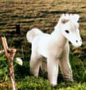 Kosen Poulain blanc 23 cm