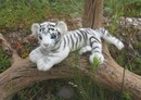 Anima Baby white tiger - 26 cm