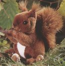 Kosen Squirrel 15 cm