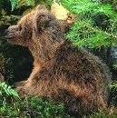 Kosen Ourson brun  Brummel  (assis) 26 cm