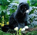 Kosen Chaton noir  Mausi  assis noir 23 cm