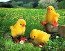 Kosen  Piep piep  Chick mohair 14 cm