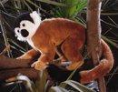Kosen Saimiri monkey 25 cm