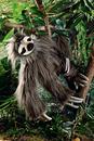 Kosen Sloth - 53 cm
