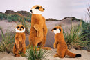 Kosen Petit suricate - 25 cm
