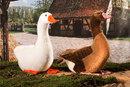 Kosen Oie blanche - 37 cm