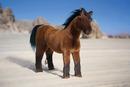 Kosen Cheval arabe - 34 cm