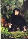 Kosen Chimpanzé - 40 cm
