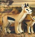 Kosen Gazelle de Thomson - 40 cm