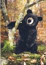 Kosen Ours noir assis - 51 cm