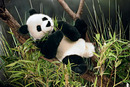 Kosen Panda assis - 28 cm