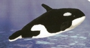 Kosen Orca baby - 20 cm
