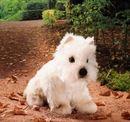 Kosen West Highland Terrier Mohair
