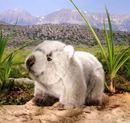 Kosen Petit wombat marsupial d'Australie