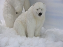 Anima Polar Bear Sitting 92cmH/155cmL