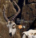 Authentic Models -AM- Anntilope skull