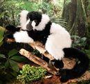 Kosen Lémurien noir-blanc 52 cm