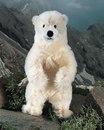 Kosen Polar Bear  Hudson  in mohair 31 cm