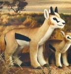 Gazelle de Thomson - 40 cm