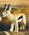 Gazelle de Thomson mâle - 40 cm