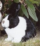 Kosen Lapin hollandais noir et blanc 25 cm