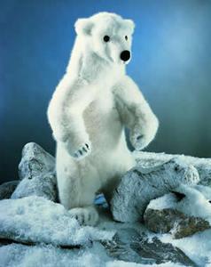 Kosen Ours polaire