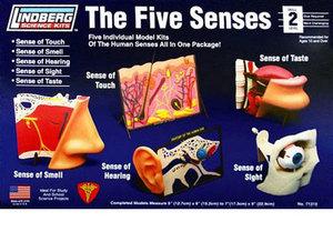 divers à assembler Les 5 Sens Humains Lindberg Quirao idées cadeaux