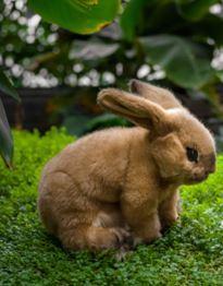 Kosen Bunny beige